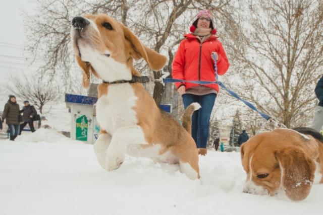 Собачьи площадки появятся в Жодино